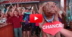 Aw! Take A Chance On Them! This Adoption Video Is The Cutest Thing Ever! | The Animal Rescue Site Blog