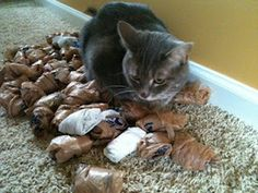 Reader Question: Can Cats be Hoarders?
