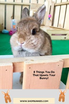 Read our Bunny Blog! #rabbits