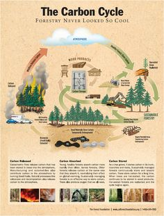 The carbon cycle : forestry never looked so cool, by the Oregon Forest Resources Institute Nutrient Cycle, Biomass Energy, Forest Resources, Forest Ecosystem, Carbon Sequestration, Carbon Cycle, Ozone Layer, Physical Geography, Sustainable Forestry