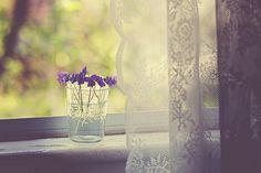 dreamy window.