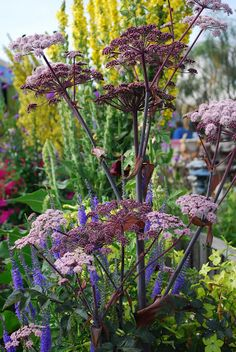 What amazing colours, I love the angelica.