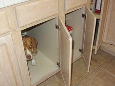 Caught in the act. Yes, I can open cabinets.