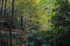After reaching Arch Rock, the Alum Cave Trail climbs through thick forest on its way to the summit of Mt. LeConte in Great Smoky Mountains National Park.