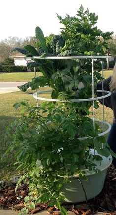 Spinach has a high nutritional value and is extremely rich in antioxidants. You can grow fresh spinach, safely, on a tower garden. https://donaldc.towergarden.com/