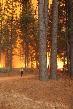 forest fires near markleeville ca | RIM-fire-US-Forest-Service-on-the-ground-helping-CAL-fire.jpg