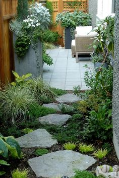 The zigzag path connecting the back garden to the side garden is accented by large planters that flank the gate and help to define the space. The ground cover between the stepping stones includes Acorus gramineus 'Minimus Aureus', gold hostas, Fuschia 'Hawkshead', Carex oshimensis 'Evergold', Lithodora diffusa 'Grace Ward', Soleirolia soleirolii 'Aurea' (gold baby's tears), and a relocated rhododendron.