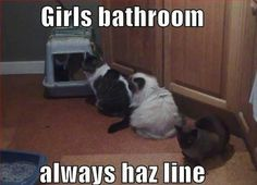 Girls Bathroom, Always Haz A Line,  Click the link to view today's funniest pictures!