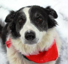 Adventures of Border Collies in the Burbs