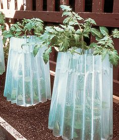 Wall O Water 3/Pack  Fill the tubes of these plant protectors with water, and you can plant earlier and harvest later.