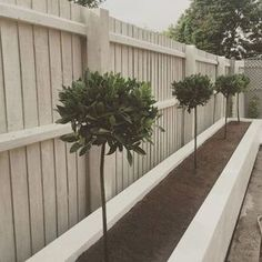 If you are looking for Small Garden Fence Ideas, You come to the right place. Below are the Small Garden Fence Ideas. This post about Small Garden Fence Ideas was. Garden Design Plans, Modern Garden Design, Backyard Garden Design, Modern Design, Backyard Ideas, Diy Design, Backyard Projects, Contemporary Landscape, Back Garden Ideas