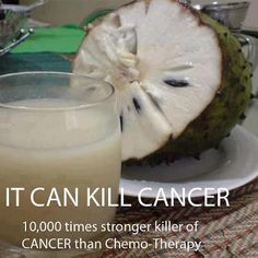 The Sour Sop or the fruit from the graviola tree is a miraculous natural cancer cell killer 10,000 times stronger than Chemo. Graviola | Soursop | Fruit - A Natural Cancer Cell Killer  www.youtube.com/...    Cancer healing tree  www.youtube.com/...