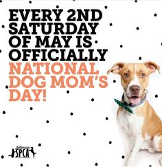 You did it! Thank you to everyone who signed the petition to make Dog Mom's Day a national holiday! Dog Mom's Day is officially the second Saturday of every May. National Day Calendar selected it as one of just 30 new days approved this year out of 20,000 submissions. We'll post more information about it as soon as National Day Calendar makes the public announcement! Puppies And Kitties, Baby Puppies, Dug The Dog, Happy National Dog Day, National Day Calendar, National Holidays, Mom Day, Dog Mom, Dog Lovers
