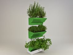 Indoor Herb walls a solution to grow herbs in tidied and spectacular conditions in your kitchen or at your garden. Using fresh and living herbs not only good for healthy and tasty foods but for healthcare and home cosmetics, like facemask or herbal teas. http://goo.gl/FfVfr3 Details: white frame white table light green plant's box 45×60 cm / 17,7×23,6 inches easy to fit water holder system