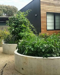 """Thriving vegie patches at the rear of our Flinders residence today! Landscape design by @brockstar64"" Small Garden Landscape, Landscape Design, Australian Native Garden, Garden Show, Front Yard Landscaping, Landscaping Ideas, Garden Fencing, Edible Garden, Hampton Garden"