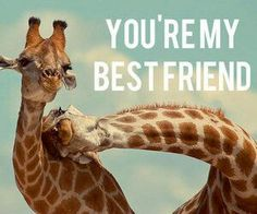 Find images and videos about friends, animal and giraffe on We Heart It - the app to get lost in what you love. Best Friends Sister, Bestest Friend, Best Friends Forever, True Friends, My Friend, Beat Friends, Bff Quotes, Best Friend Quotes, Funny Animals