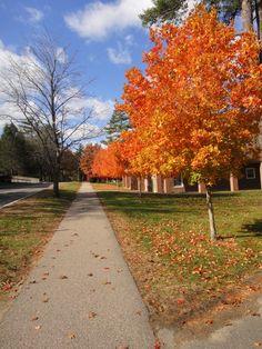 Autumn at Babson
