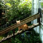Jane and her husband saved a lot of money building this outdoor cat enclosure at their home in Virginia by...