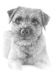 draw a realistic terrier Animal Drawings, Pencil Drawings, Art Drawings, Pencil Art, Drawing Animals, Dog Pencil Drawing, Drawing Art, Graphite Art, Graphite Drawings