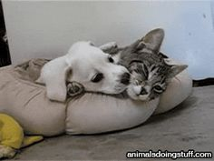 Just animals doing animal things (30 gifs) - Imgur