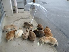 "21 Awesome Pictures Of ""Bunny Island"" - OMG I want to go!!!!!"