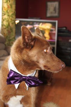 My buddy Ronnie Modelling the Bow Tie and Collar I made for my daughter--her dog wore it at her wedding.