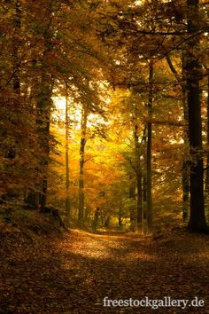 Waldweg im Herbst - freestockgallery.de
