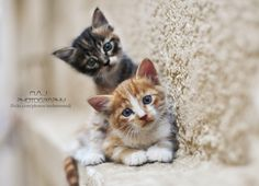 Two cats - II by  Mohammed  Al-Jawi   (Mohammedj) on 500px.com
