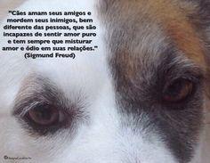 """""""Cães amam seus amigos e mordem seus inimigos, bem diferente das pessoas, que são incapazes de sentir amor puro e tem sempre que misturar amor e ódio em suas relações."""" (Sigmund Freud)"""