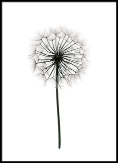 Botanical poster | Print with photograph of a dandelion | Prints online
