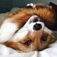 cute fox Juniper who else :) Juniper the Cute Creatures, Beautiful Creatures, Animals Beautiful, Cute Baby Animals, Animals And Pets, Funny Animals, Wild Animals, Fuchs Illustration, Wolf Hybrid