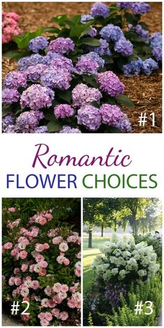 Roses and hydrangeas are the perfect choice for a classic, romantic garden. Here you see 1. Let's Dance Blue Jangles reblooming hydrangeas, 2. Oso Happy Petit Pink roses, and 3. Bobo hardy hydrangeas. These ones rebloom! Win $250 in flowers to make your garden pop with the Proven Winners Dream Garden Sweepstakes #ad