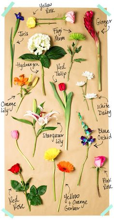 Roses & Flower inspiration Board.