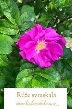 Den, Flowers, Plants, Plant, Royal Icing Flowers, Flower, Florals, Floral, Planets