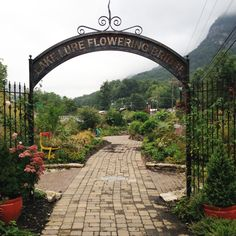 The Lake Lure Flowering Bridge in North Carolina - FineGardening Lake Lure North Carolina, Asheville North Carolina, North Carolina Mountains, Asheville Nc, Nc Mountains, Appalachian Mountains, Fine Gardening, Garden Photos, Back Home