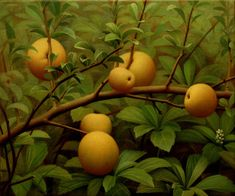Brett Bigbee - Quince 2000-2001     oil on canvas     14 1/4 x 17 1/4 inches