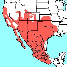 Range Map For The Black Widow Spider Wildlife Of BC Pinterest - Map of poisonous spiders in the us