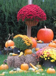 Fall Yard Decorating with hay, pumpkins and mums!  http://barnaclebill.hubpages.com/hub/decoratingyardfallhalloweentutorialstips