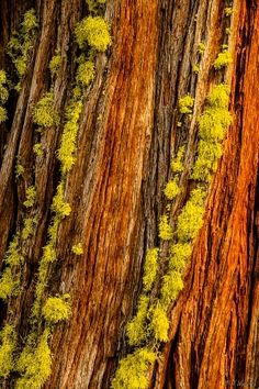 Bark with lichen. add more lichen to one side because it usually grows on one side.
