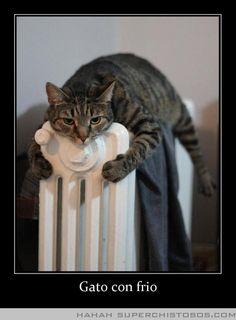 Gato Con Frio