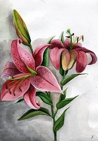 lily by Hikaru-Akeno on deviantART Lily Wallpaper, Watercolor Paintings, Watermelon, Deviantart, Fruit, Artwork, Flowers, Plants, Image