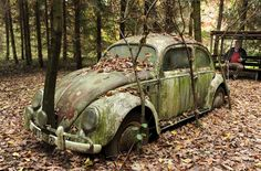 A tree grows through the bumper of a 50 years old Volkswagen Beetle in Otto Weymann's garden, in Fuldatal, Germany. The Beetle was supposedly the first car to cross the German border after the Berlin Wall fell. Weymann says he bought the car 20 years ago from two East Germans, who had just passed the nearby border between East and West Germany and needed money. Weymann parked the Beetle in his garden and planted trees in front of and behind it…