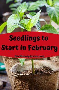 There are 14 seedlings you can get started in February. Learn which ones to plant to get a jump start into your gardening season. ideas February Seed Starting Schedule - Our Stoney Acres Greenhouse Gardening, Container Gardening, Mini Greenhouse, Vegetable Gardening, Organic Gardening Tips, Garden Pests, Seed Starting, Plantation, Edible Garden