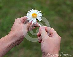 The man wonders on daisy