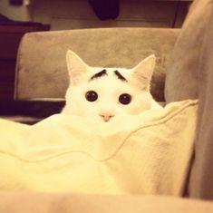 Sam the super worried cat - Imgur