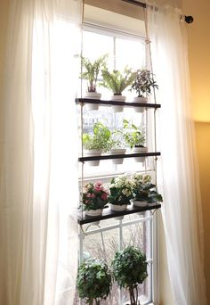 Planter Shelves Custom Hanging Herb Garden Shelves Plant Kona The perfect planter for hanging in a sunny window, this handcrafted wooden shelf holds up to nine adorable 3 Culture D'herbes, Window Plants, Indoor Window Planter, Hanging Herbs, Hanging Herb Gardens, Diy Hanging, Window Shelves, Plant Window Shelf, Indoor Plant Shelves
