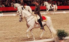 Combining Dressage with Clicker Training — barebackandbarefoot: The Spanish Riding School. Spanish Riding School Vienna, Lippizaner, Lipizzan, Conquistador, White Horses, Horse Training, Horse Photography, Horse Love, Equestrian Style