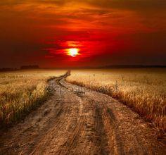 Droga — Zdjęcie stockowe © mihtiander #8149360