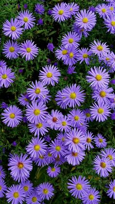Find images and videos about gif on We Heart It - the app to get lost in what you love. Purple Flowers Wallpaper, Flower Iphone Wallpaper, Sunflower Wallpaper, Flower Backgrounds, Exotic Flowers, Amazing Flowers, Pretty Flowers, Beautiful Landscape Wallpaper, Beautiful Flowers Wallpapers