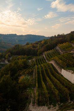 Piedmont Vineyards, Italy - Piemonte, vigneti